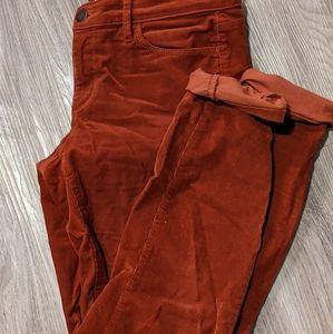Corduroy Pants Loft
